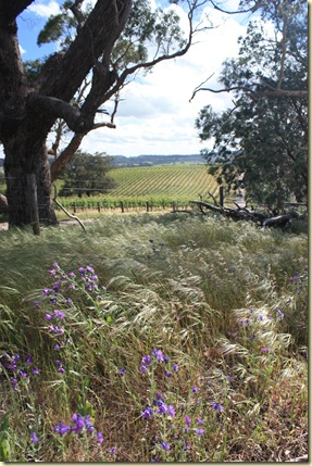 Australie2008_ 597_Barossa Valley