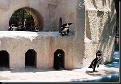 ペンギン02