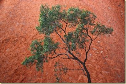 Australie2008_ 680_Red Center_Uluru