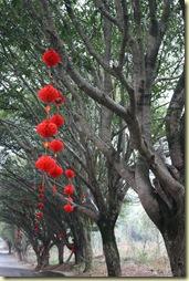 GuilinYangshuo0109_494