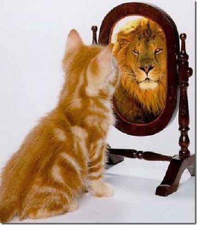 Resultado de imagen de fotos de gato frente al espejo