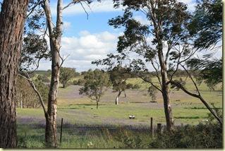Australie2008_ 599_Barossa Valley