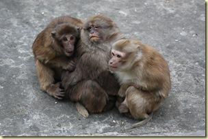 GuilinYangshuo0109_130