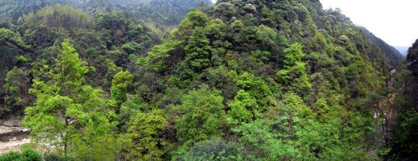 茶叶厂后山双河口景观