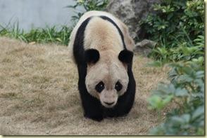 GuilinYangshuo0109_114