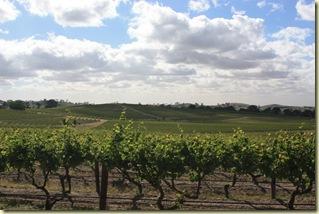 Australie2008_ 598_Barossa Valley