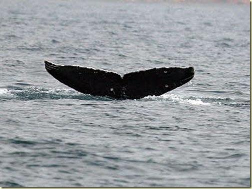 whaleHK